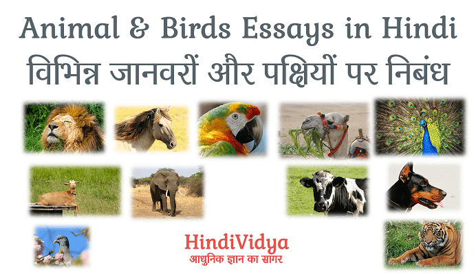 Essays on animals